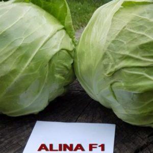 ALINAF1