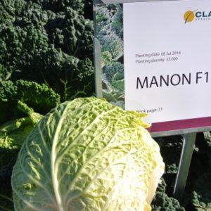 manon-f1-glavna-slika